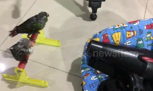 Pampered parrots love to get a good blow dry