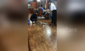 Shocking moment Hanoi chef removes heart from wriggling snake next to diners