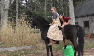 Funniest Horse Fails
