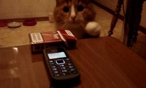 Cat Comes Running to Familiar Ringtone