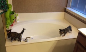 Sweet Kittens turn Bathtub into their Playground