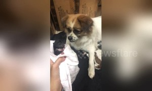 Heartbreaking moment dog sheds tears over her own weak puppy