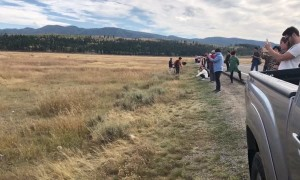Tourists Take Pictures Dangerously Close to Bison