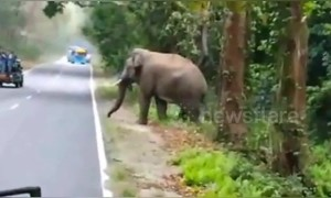 Wild elephant charges tourist vehicle in Northeast India