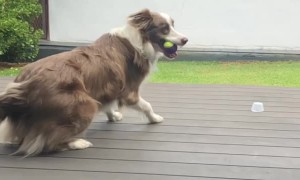 Diving Doggo's Incredible Catch