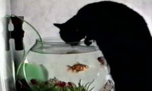 Kitty gets a Drink in an Unusual Spot