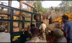 Indian forest officials capture man-killer elephant