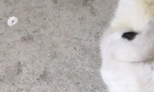 Cute Kitty Can't Quit Kicking