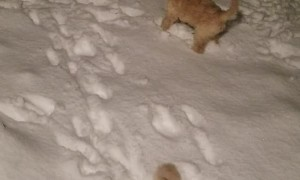 Puppies Play in Their First Snowstorm