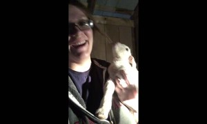 Adorable newborn baby goat has a lot to say