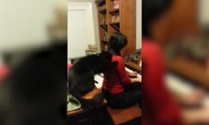 Cat or Music Critic?