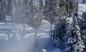 Dude Ditches Sled to Avoid Tree
