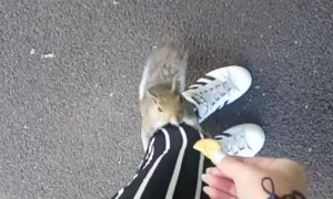 Squirrel Snags a Snack