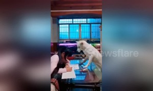 Well-trained dog helps dad supervise his daughter doing homework