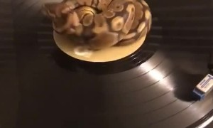 Record Player Python