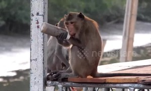 Heartbreaking moment wild monkey is found with plastic bottle stuck on his wrist