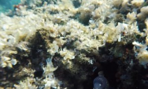 Face to Face with a Moray Eel