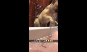 Dog totally shocks owner by jumping into her bath