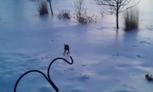 Doggo on Ice!