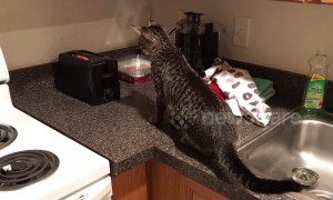 What a scaredy cat! Feline gets a fright in toaster encounter