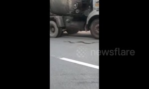 Kind-hearted man stops truck from crushing endangered king cobra on highway