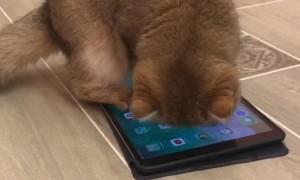 A Sweet Spot for a Cat Nap