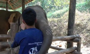 Cute alert! Baby elephant prods mahout with its trunk