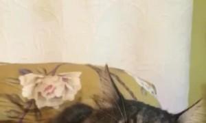 Sweet Kitty Suckles On Finger Before Sleeping
