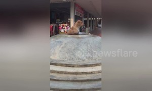 Clever dog cools off in water fountain on hot day