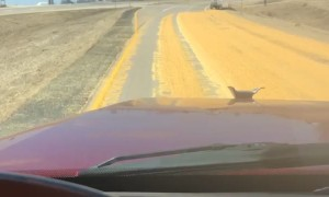 Semi Truck Spills Corn Load onto Highway