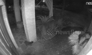 Witch on the prowl? 'Ghost' black cat spotted vanishing on Nest Cam