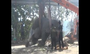 Sick elephant has to be craned upright to receive medicine in north India