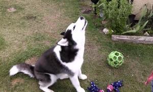 Sassy Huskies
