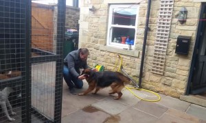 Dog cries out in happiness after being apart from owner for months