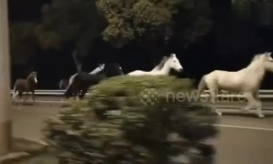 Runaway horses gallop along road at midnight in Shanghai