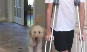 Dog hilariously mocks teenager's broken leg 'walk'