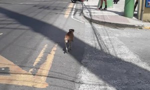 Dog Has Some Serious Street Smarts