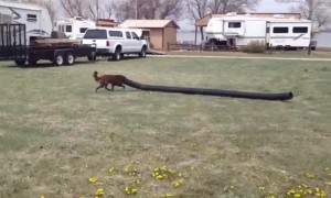 Is this Dog Just Really Long?
