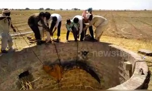 Team of villagers fish crocodile out from 30-foot drywell in west India