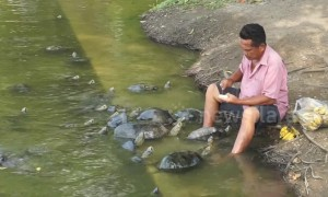 'Turtle man' spotted feeding dozens of reptiles at Thai palace