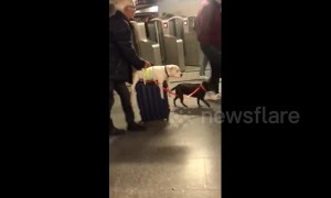 Lazy dog hitches ride on owner's suitcase while going through Paris subway