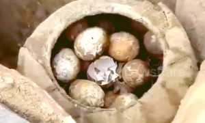 Archaeologists find a jar of eggs in ancient tomb in China's Jiangsu