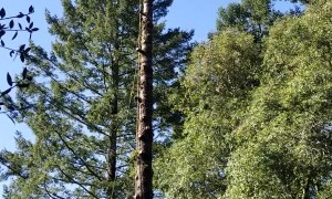 Man Removes Tree, Tree Tries to Remove Man