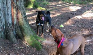 Hound Dog Teaches His Friend How to Howl