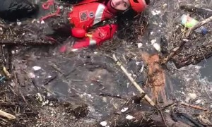 Emotional Rescue of Small Dog from Icy River