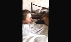 German Shepherd whines to owner and tells her all about her