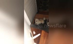 Caught red-pawed! Cheeky dog gets caught stealing toilet roll