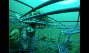 Completely Filling a Crab Trap