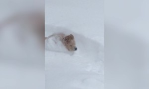Adorable Dog Loves the Snow