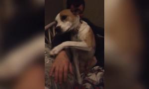 Pup won't let Cuddles End